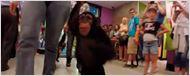 Así reaccionan dos chimpancés al ver 'El amanecer del planeta de los simios'