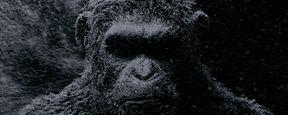 'La guerra del Planeta de los Simios': 10 curiosidades que quizá te guste saber de la trilogía