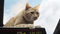 'Capitana Marvel': El 80% de las escenas de Goose, el gato de la protagonista, eran CGI