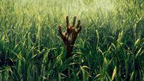 Netflix inaugura Sitges 2019: 'En la hierba alta', de Stephen King, abrirá el festival