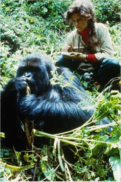 Im genes de gorilas en la niebla 9 sobre 13 for Gorilas en la niebla